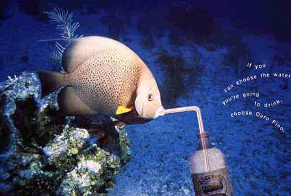 fish1998.jpg