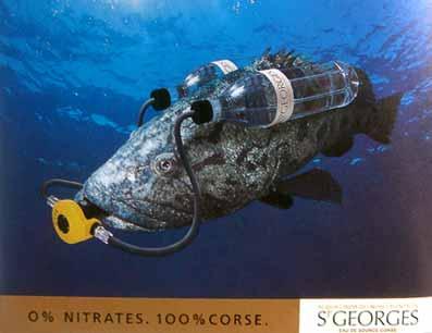 fish2002.jpg