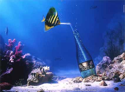 fish_bronzea2003.jpg