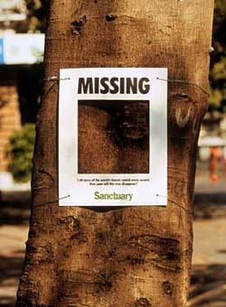 missing2003.jpg