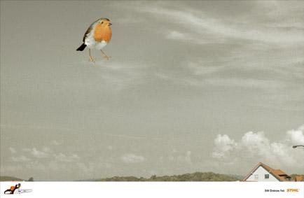 oiseauvide2006.jpg