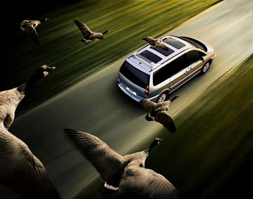 oiseaux6.jpg
