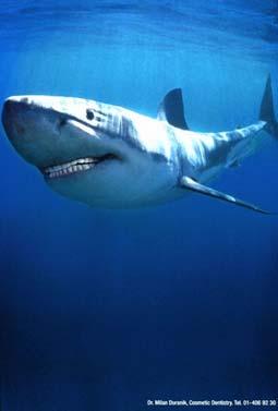 requin2002_2619.jpg