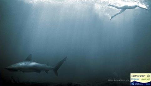sharknatra.jpg