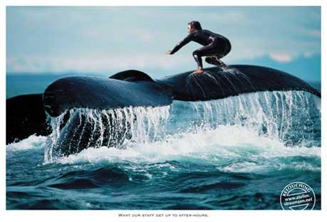 surfbaleine2006.jpg