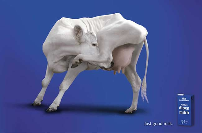 vache2003epica.jpg