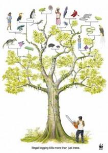 treecut2008