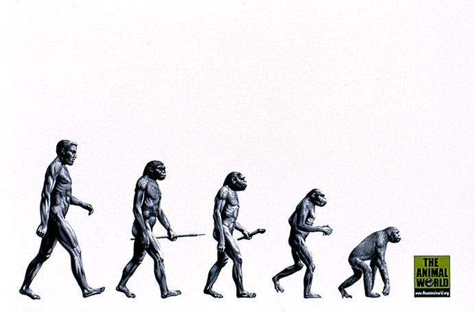 evolution2001