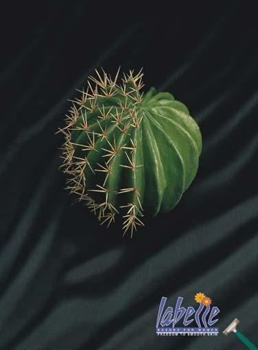 cactus2004