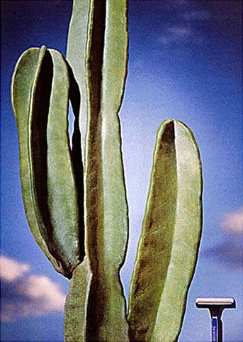 cactus99