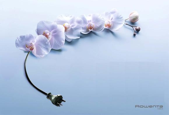 orchidee2003