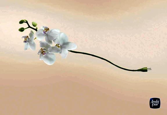 orchidee2009