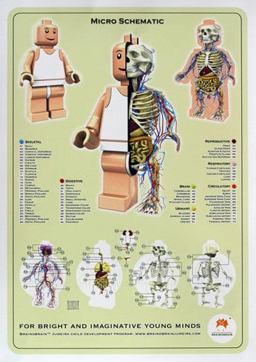 anatomy2009w