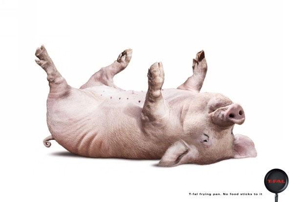 Pig2003