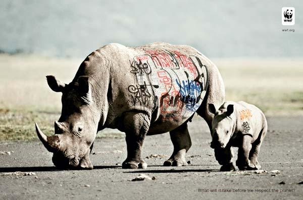 rhinos2010