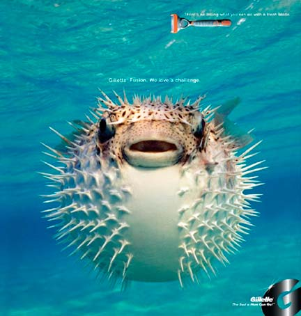 fish2009b