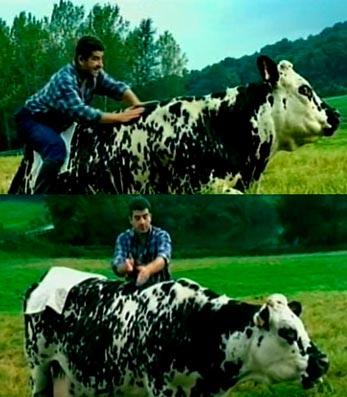 cow2001