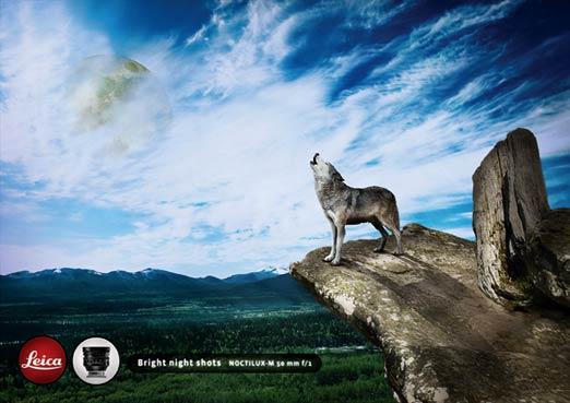 http://www.joelapompe.net/wp-content/uploads/2011/04/wolf1.jpg