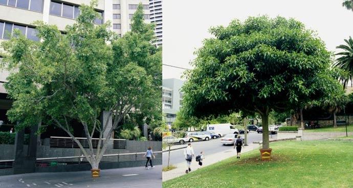 treepot2003