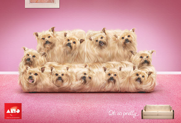 dogcoach2011