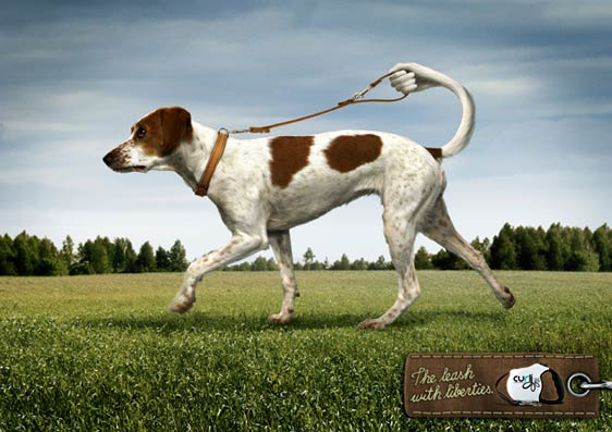 dogtraining2012