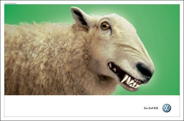 sheep2003