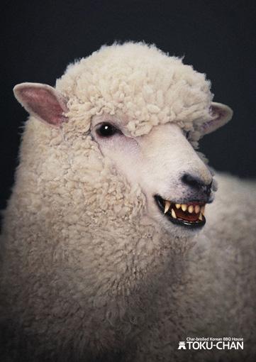sheep2012