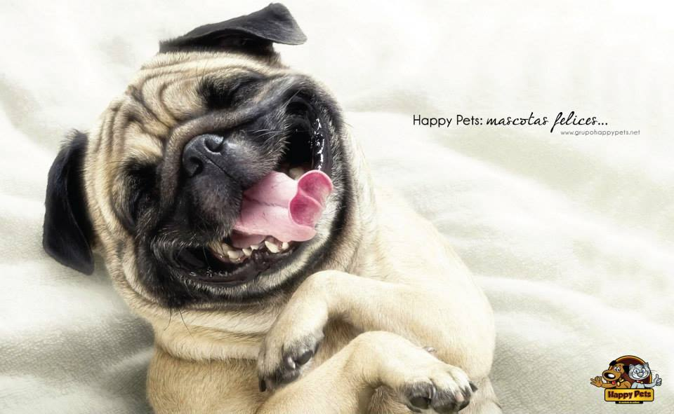 smilingdog2013PlanBHonduras