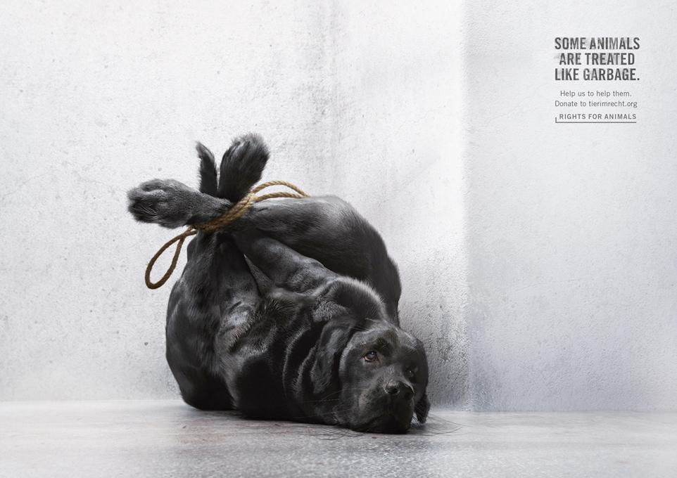 Pets treated like garbage / Une Idée ressortie de la poubelle?